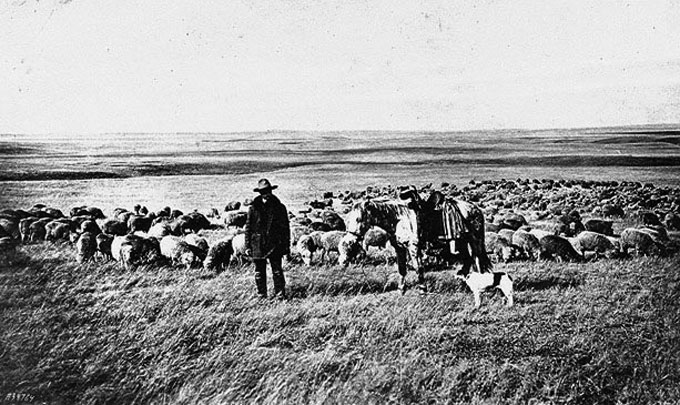 Lucy Morrison Moore The Sheep Queen Of Wyoming Wyohistory Org