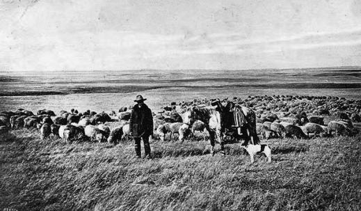 J B Okie Sheep King Of Central Wyoming Wyohistory Org