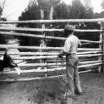Dutch Stepp ropes a calf at the family's ranch next to the Green River. Stepp family photos.