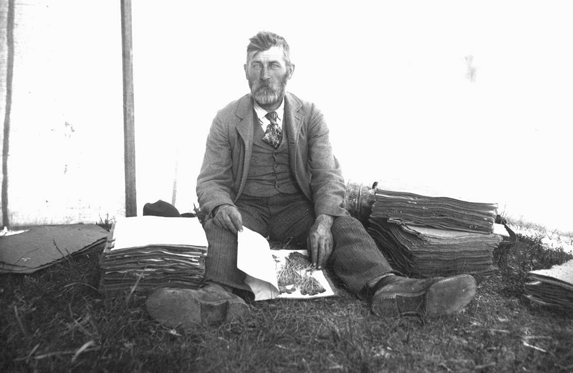 University of Wyoming botanist Aven Nelson shows books of plant specimens in Yellowstone Park, 1899. He was happiest when working in the field. American Heritage Center.