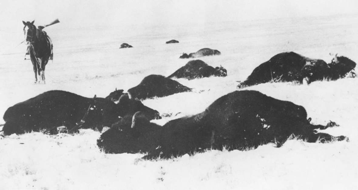 Buffalo were gone from the Wyoming ranges by the mid-1880s. Twenty years later, it looked as if elk, deer and especially pronghorn antelope might face the same fate. Wyoming State Archives.