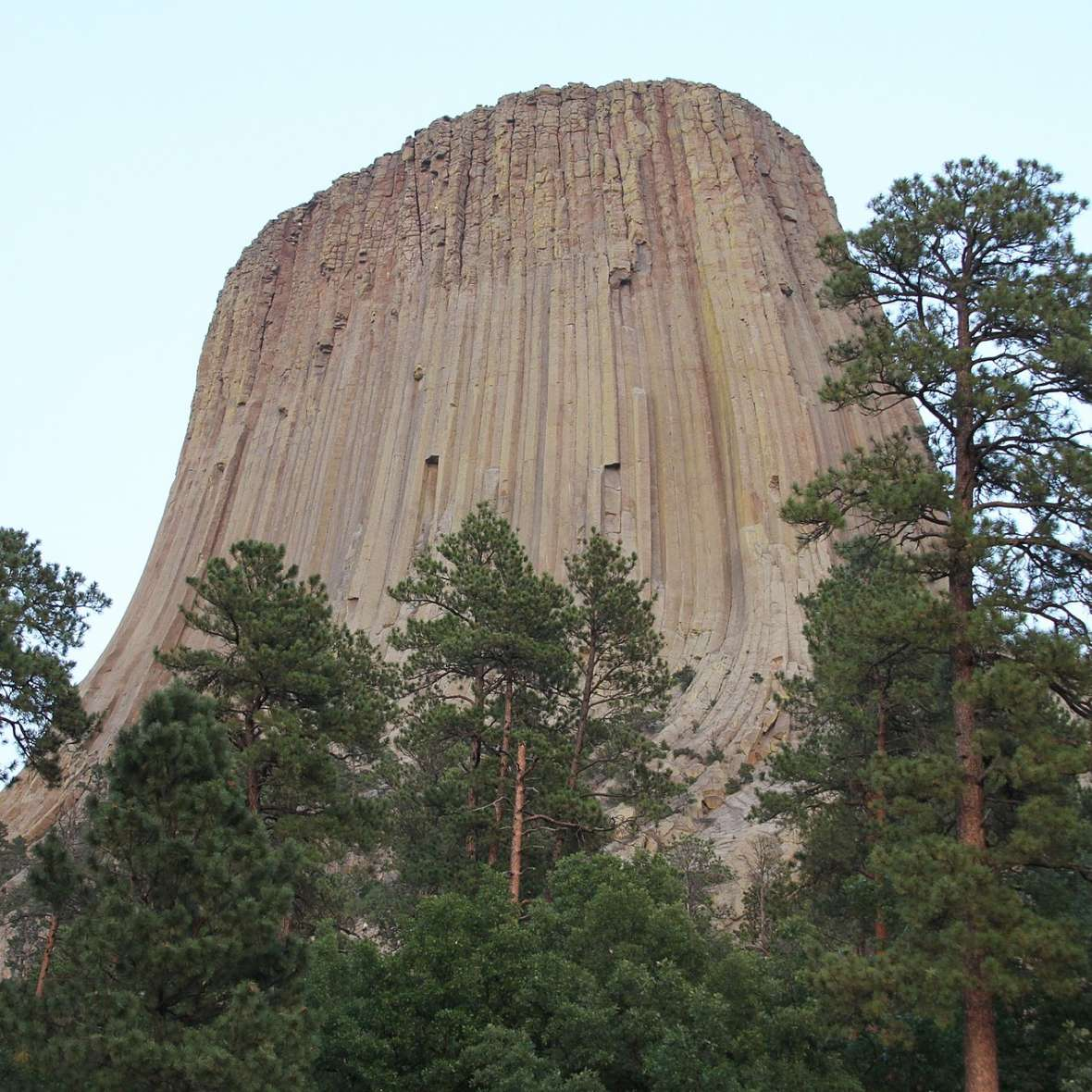 Devils Tower today. Wikipedia.