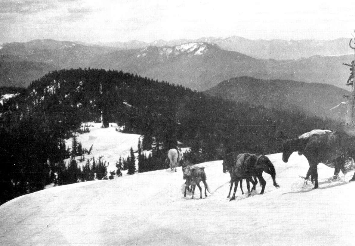 Pack animals in rough country on the 1904 survey of the Montana-Idaho border. Mules were essential to Richards's efforts. One tipped over backward from a cliff 40 feet high, flipped twice, landed on its back, smashed the pack and packsaddle but survived to go on working. Riverton Museum.
