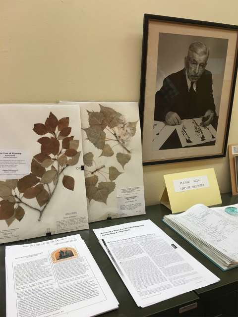 A photograph of Aven Nelson hangs at the Rocky Mountain Herbarium, which he founded in the early days of the university. Lori Van Pelt.